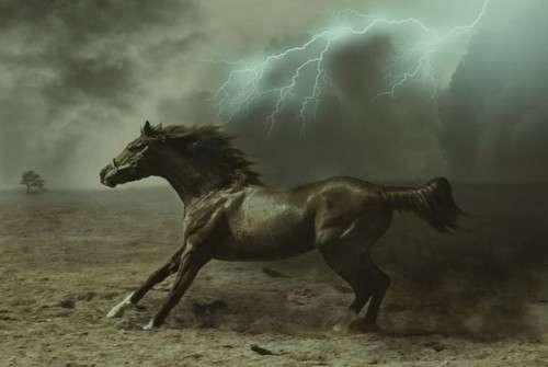 اروع واجمل الخيول في صور . خيول عربية horses3.jpg