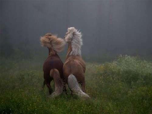 اروع واجمل الخيول في صور horses5.jpg
